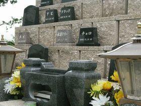 墓石建立雛壇